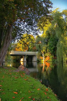 Weeping Willow Bridge, Odense River, Denmark