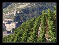 clindoeil-photos: Les vignes de Tain l'Hermitage (Drôme)