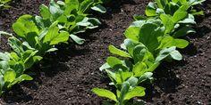 Vrt se zimi odmara, u proljeće nastupaju priprema i radovi koji se do ljeta intenziviraju, u jesen aktivnost opada, a zima donosi prividni smiraj. U osnovi se svi radovi u vrtu svode na pripremu tla, sadnju i sijanje, presađivanje, održavanje i na koncu sakupljanje usjeva.