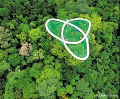 Unique view of Earth's most biodiverse ecosystems from 400 square metres of mesh high up in the rainforest canopy Halle, Autocad, Francis Hallé, Rainforest Habitat, Forest Ecosystem, Holiday Lettings, Rappelling, Vacation Home Rentals, Tree Tops