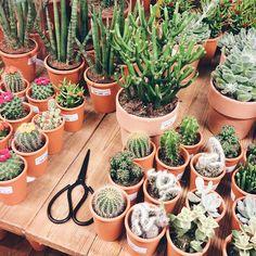 A N J A @byanjaroos Cactus cuties•Instagram photo | Websta (Webstagram)