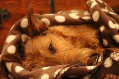 Sleeping beaty.