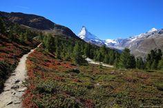Autumn colors, Zermatt, Matterhorn, Switzerland,  ©swissmountainview.ch Zermatt, Switzerland, Autumn, Mountains, Colors, Places, Nature, Travel, Naturaleza