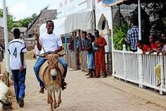Image result for donkey race Donkey, Racing, Image, Running, Donkeys, Auto Racing