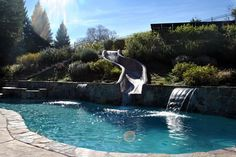 One of the gorgeous local pools we've worked on here in Northern California's Bay Area Swimming Pool Repair, Swimming Pools, Aqua Pools, Northern California, Bay Area, Gallery, Outdoor Decor, Swiming Pool, Pools