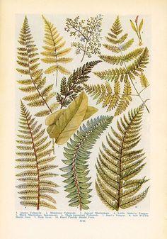 4201bab1078624bc60191b1b9aa9474d--botanical-illustration-illustration-art.jpg 550×787 pixels