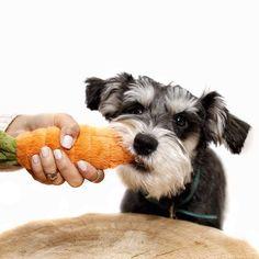 10 frutas y verduras tóxicas para perros