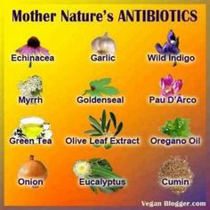 Mother Nature's Antibiotics. Garlic and onion are the most common antibiotics. Cats Claw is another potent immune supporter!