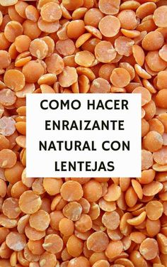 Como hacer enraizante natural con lentejas by leanna Green Garden, Garden Plants, Organic Gardening, Gardening Tips, Green Life, Growing Plants, Growing Vegetables, Vegetable Garden, Container Gardening