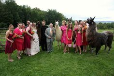 Where can we get llamas to attend our wedding? :)