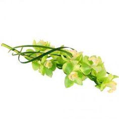 Green Orchid, Interflora, Finnish Flower Shop, March 2016