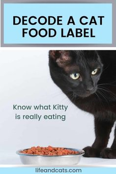 Learn to read between the lines of cat food labels to find out what producers are selling to you and your cat. Understand the regulations and definitions. Cat Nutrition, Kitten Care, Cat Care Tips, Healthy Pets, Cat Behavior, Cat Grooming, Happy Animals, Cat Health, Food Labels