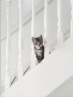 Hi kitty :)