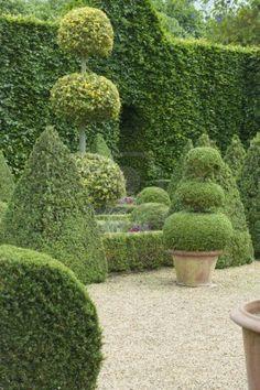 English boxwoods garden design