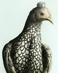 luxury-chicks-peter-lippmann