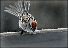 http://fineartamerica.com/featured/taking-flight-michele-thielke.html