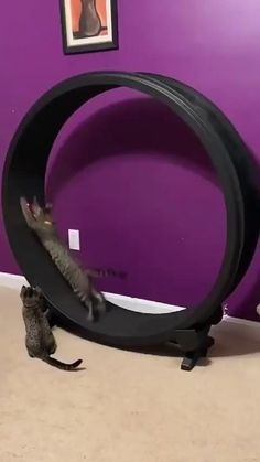 Funny Animal Jokes, Funny Animal Videos, Cute Funny Animals, Funny Animal Pictures, Animal Memes, Cute Cats, Funny Cats, Cat Exercise Wheel, Cute Little Animals