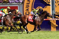 Suavito (NZ) 2010 B.m. (Thorn Park (AUS)-Queen Cha Cha (NZ) by High Chaparral (IRE) 1st MRC C F Orr S (AUS-G1,1400mT,Caulfield) (photo: Racing and Sports)