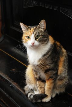 Do you know what the most common behavioral problem is in cats?
