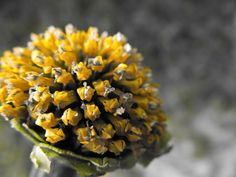 Bursting Forth by ~katara764 on deviantART