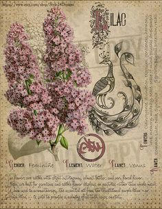 Book of Shadows page. Sorry, This page is only available to my customers for free, I don't sell it in the Etsy Magic Herbs, Herbal Magic, Wiccan, Magick, Grimoire Book, Libros Pop-up, Witch Herbs, Witchcraft For Beginners, Green Witchcraft