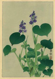 torii gallery: Purple Flowering Hosta by Ohara Koson Japanese Art Styles, Japanese Artwork, Japanese Prints, Japan Painting, Fruit Painting, Vintage Botanical Prints, Botanical Art, Illustrations, Illustration Art
