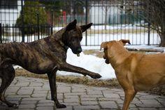 Bone Kink 1: Slap    SLAP YOU ACROSS THE FACE!