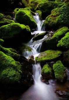 Green moss on river rock.