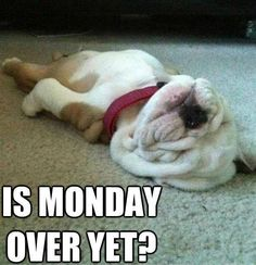 Is Monday over yet funny quotes puppy monday days of the week humor monday quotes