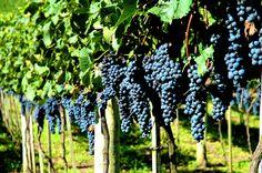 Bordeaux, San Sebastían e Rioja