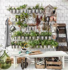 Mehr Grün für dein Zuhause! Wie wärs mit ein paar grünen Mitbewohnern