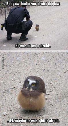 He wasn't even afraid - 9GAG