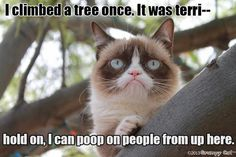 Grumpy climbed a tree once...