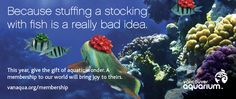 """If you're on the hunt for memorable gifts this season that your loved ones will cherish, consider a """"green"""" gift that will not only reduce environmental impact, but will also support aquatic conser… Vancouver Aquarium, Animal Makeup, Green Gifts, Memorable Gifts, Giving, Conservation, First Love, How To Memorize Things, The Incredibles"""