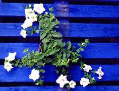 Vanilla White flowers
