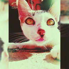 Con Mi Gato ñ