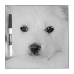 Great Pyrenes Puppy Dry Erase Board