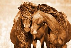 The Wild Horses of Sable Island, presenting 20 years of iconic photography, is exclusively available through the gallery. Individually signed and uniquely inscribed by Roberto Dutesco.