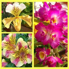 orchidées, alstroemères... de bonnes idées de cadeaux