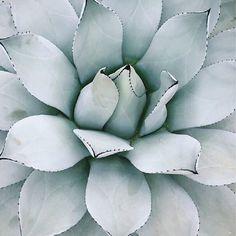 """""""  P A L E T T E  Crisp color inspiration #Succulent #Inspiration #ColorPalette"""""""
