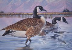 Canadian Geese painting by Rob Corsetti, 2013. Entry for Federal Duck stamp competition,