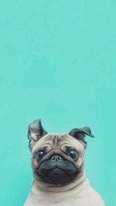 Animals wallpaper iPhone
