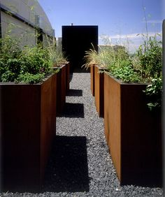 DEPRESSED PLANE...Looking at the meditation pavilion from within the grid of Corten steel planters.