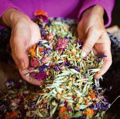 "WOMEN, HERBS, OVARIES AND VANISHING CASSEROLES blog post - ""Herbs have a gentle power that is attuned to the female spirit and has an impressive way of helping women's health problems because of this natural affinity."" - Clara Bitcon I Naturopath & Herbalist"