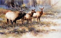Bull Elk with Cows by Joe Garcia Watercolor ~  x