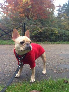 minniebeingminnie:  Brisk fall walk. It is officially sweater season here in London.