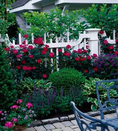 Red knock out roses. Blue violet salvia Verbena and hostas. Accented w white fence.