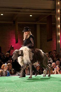 "Haute Dog Fashion Show"""