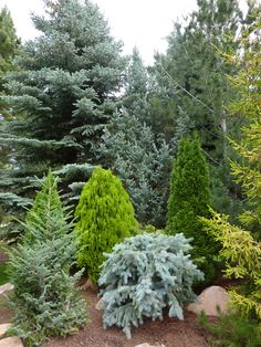 conifer garden in Colorado