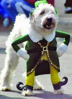 Blog de mascotas, tipos de mascotas, mascotas accesorios, tipos de animales, mascotas blog, mascotas hogar, tortugas mascotas